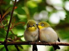 Birds_Kiss